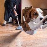 Best Vacuum For Pet Hair Reviews