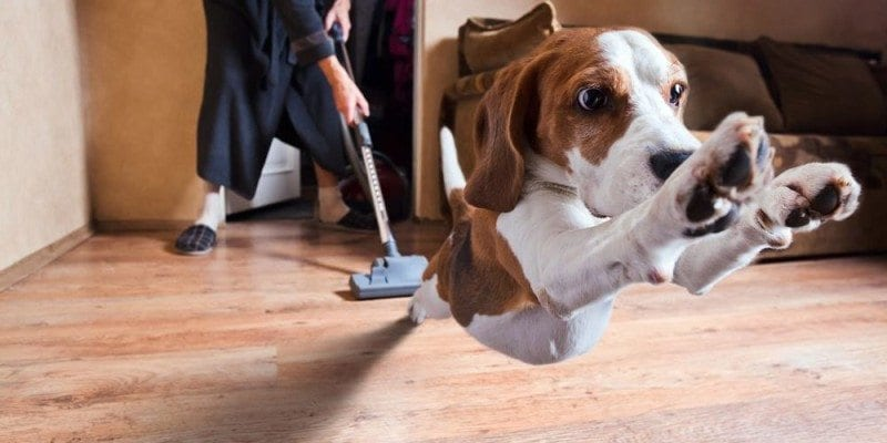 Best Vacuum For Pet Hair Reviews